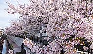 渋川沿いの桜並木 約200m(徒歩3分)