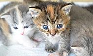 家族の一員としてペットと一緒にお住まいいただけるマンションです。※飼育できるペットには種類・大きさなど制限がございます