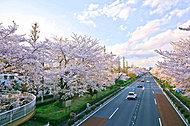 大学通り(平成26年4月撮影) 約70m(徒歩1分)