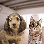 犬や猫など大切な家族の一員と一緒に暮らせるマンションです。※ペットの種類や数、サイズなどには制限がございます。詳しくは係員にお尋ねください。