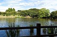 白幡沼 約730m(徒歩10分)