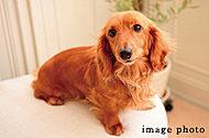 大切な家族の一員でもあるペットと快適に暮らすことができます。※ペットの種類・大きさなどの制限や飼育規則があります。