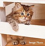 大切な家族の一員、ペットと一緒に暮らせます。※ペット飼育に関する規約等を尊守していただきます。