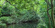 狛江弁財天池特別緑地保全地区 約210m(徒歩3分)
