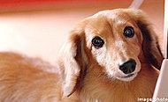 ※ペットの飼育については管理規約・使用細則の規定を遵守していただきます。