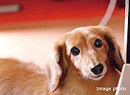 大切なペットと暮らせる、ペット飼育可能なマンションです。※ペットの飼育については管理規約・使用細則の規定を遵守していただきます。