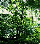 岡本公園 現地より約160m※1
