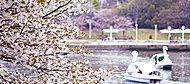 新左近川親水公園 現地より約1,480m(平成28年4月撮影)
