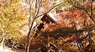 清水寺 現地より約1,960m(平成27年11月撮影)