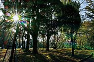 千葉公園 約150m(徒歩2分)