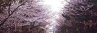 北海道神宮 GT:徒歩15分/約1,170m・BT:徒歩15分/約1,180m※3