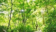 国立科学博物館附属自然教育園 徒歩7分/約530m ※平成27年5月撮影