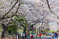 谷中霊園 約940m(徒歩12分) ※2015年4月撮影
