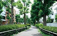 北沢川緑道 約2,400m(徒歩30分) ※2015年5月撮影