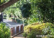 呑川緑道 約300m