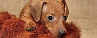 大切な家族の一員としてのペットとの暮らしを一層幸せなものにしていただくことを目指しました。※ペットの種類等には制限がございます。