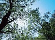 宮前美しの森公園 約670m(徒歩9分)