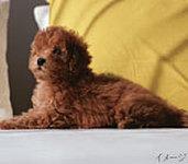 家族の一員として心を癒してくれるペットと、一緒に暮らせます。※ペットの種類や大きさ、数など制限があります。詳しくは、係員にお尋ね下さい。
