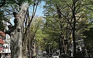 府中並木通り 約1,100m