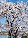 上野恩賜公園 約1,280m(徒歩16分)