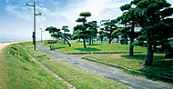 千鳥南公園 約740m(自転車3分)