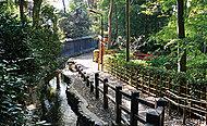 お鷹の道・真姿の池湧水群 約1,580m(徒歩20分)