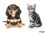 「ファーネスト春日パークス」は、大切なペットと一緒に暮らせるマンションです。※ペット飼育に関しては制限がございます。詳しくはお尋ねください。