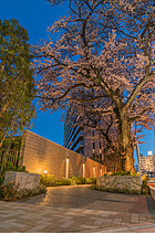 """静けさと開放の懐に。JR横浜線快速停車駅「相模原」駅から徒歩6分。メインストリートから一路奥まったその場所は、文字通り""""喧噪と一線を画す""""都市の懐。"""