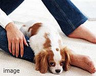 ※ペットの種類や大きさ、数など制限があります。詳しくは、係員にお尋ね下さい。