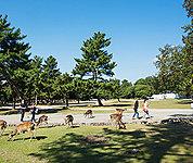 奈良公園 約1,740m(徒歩22分)