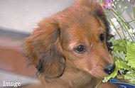 ペットも家族の一員。共用部にはペット専用の足洗い場を設置しており、散歩帰りなどに便利です。※ペットの飼育は規約で制限がございます。