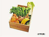 100%有機JAS認定の野菜をはじめ、700種類の加工食品などを販売する、京阪グループの「ビオ・マーケット」と提携。
