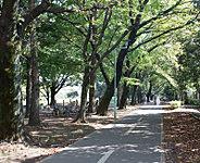 小平グリーンロード 約210m(徒歩3分)