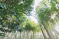 すずめのお宿緑地公園 約600m