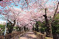 青山霊園 約390m