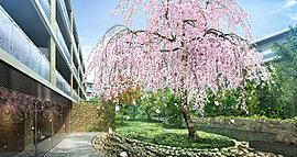 中庭には、シンボルツリーであるシダレザクラを。敷地内にはさらに3種類のサクラを配置しており、それぞれの魅力を愉しむことができます。その他にも多彩な木々を配すことで、四季を身近に感じられる杜を生み出しました。