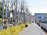 新川千本桜(花見橋付近) 約800m(徒歩10分)