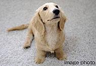 ル・サンク美明 壱番館では、ペットと一緒に暮らすことができます。その際にいくつかのルールを定めておりますので詳しくはお問い合わせください。