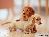 家族と一緒に大切なペットと暮らすことができます。※飼育できるペットの種類や数は制限があります。