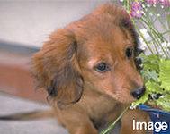 管理規約に準じて、ペット飼育が可能となっています。種類・サイズ・頭数等には制限があります。