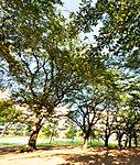 福岡中央公園 約140m(徒歩2分)