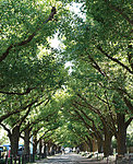 明治神宮外苑 約2,120m(徒歩27分)