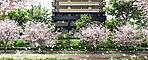 北区にして、風光明媚な景観を誇る。水都・大阪ならではの暮らしを謳歌するためのステージが誕生します。都会を潤すように流れる大川に寄り添う。対岸には大阪を代表する桜の名所、毛馬桜之宮公園が美しい景色を見せます。