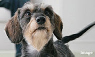 家族の一員であるペットと一緒に暮らせます。お散歩帰りにも安心なペット専用の足洗い場のご用意もあります。