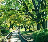 元茨木川緑地公園 約10m(徒歩1分)