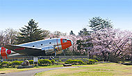 所沢航空記念公園の桜 約680m(徒歩9分)