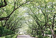 キラリ公園 約520m(徒歩7分)