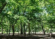 井の頭恩賜公園 約100m(徒歩2分)