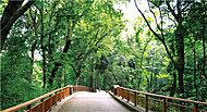 林試の森公園 約1,300m(徒歩17分)