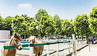 水元中央公園 T.約1,420m(徒歩18分) R.約1,530m(徒歩20分)